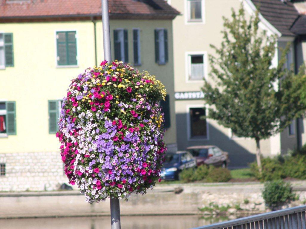 Pflanzen Im Außenbereich Gärtnerei Fischer Burglengenfeld