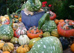Herbstfest Gärtnerei Fischer Burglengenfeld