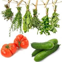 Gemüse Gärtnerei Fischer Burglengenfeld